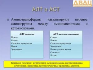 Почему АСТ выше АЛТ?