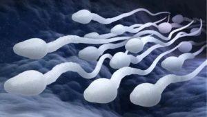 Что убивает сперматозоиды?