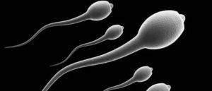 Есть ли сперматозоиды в смазке?