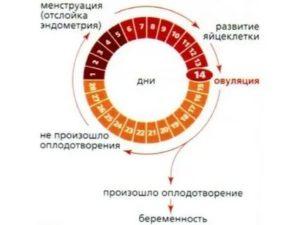 Можно ли планировать беременность со следующего цикла?