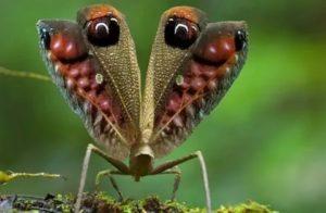 Начала замечать странных насекомых