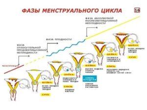 Сбился менструальный цикл