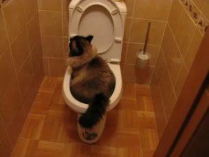 Не могу сходить в туалет
