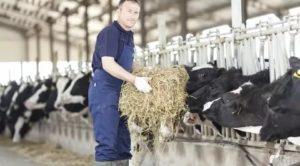 Не вредно ли работать на ферме?