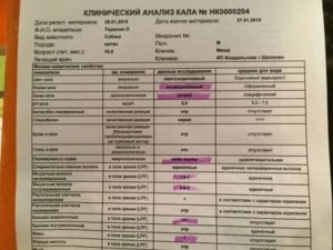 Расшифруйте анализ кала на микропейзаж