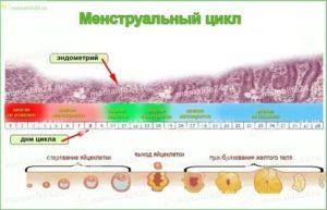 Отсутствие овуляции, эндометрий не растёт и фолликулы не развиваются