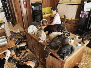 Можно ли заводить домашних животных?