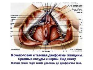 Уплотнение между влагалищем и анусом