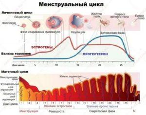 Почему менструальный цикл каждый раз разный?