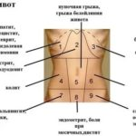 Морщины на половом органе