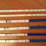 Сколько времени делается анализ на кариотип?