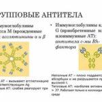 Повышены лейкоциты