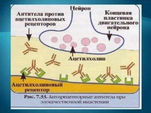 Антитела к ацетилхолиновому рецептору