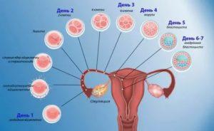 Может ли быть такое, что получилось зачатие?