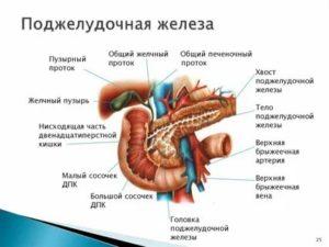 Не работает поджелудочная железа