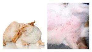 Можно ли умереть от аллергии на кошек?