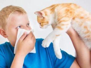 Аллергия на кошку и астма